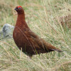 Ban Driven Grouse Shooting Parliamentary Debate